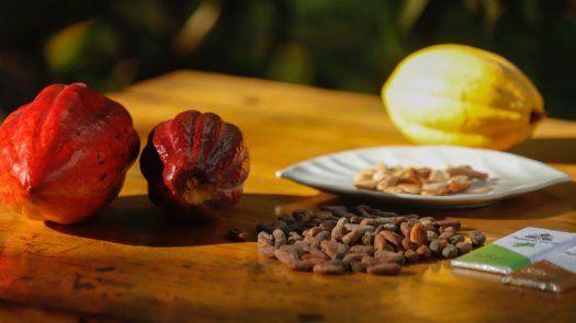 La calidad del cacao panameño, entre los 50 mejores del mundo, se medirá en la recta final frente a los atributos de iguales rubros producidos por distintos países